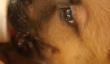 Boissons sucrées chiot d'une bouteille de bébé (Vidéo)