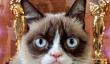 Grumpy Cat Nouveau film: «Parcs et Rec 'Star Aubrey Plaza Voice Meme Cat in Film de vie