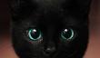20 raisons pour lesquelles les chats sont Impressionnant