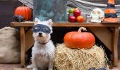 Vous n'êtes pas Lame de vouloir une Lame Halloween