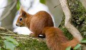 Le diable est un écureuil - origine et l'utilisation du proverbe