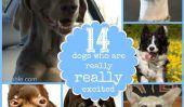 14 chiens qui sont vraiment, vraiment excité
