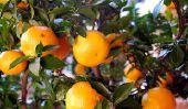 Quoi ?!  Jus d'orange est pas une boisson de santé ?!