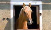 Faire des signes de boxe pour cheval lui-même