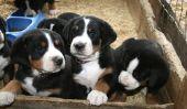 Acquérir le «chien preuve» - de sorte que vous pouvez démontrer votre expertise