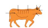Maladie de la vache folle: What It Is et que vous pouvez faire