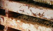 Combat plâtré - afin d'aider vos abeilles