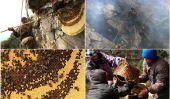Les chasseurs de miel au Népal