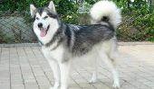 Top 10 des chiens les plus dangereux au monde