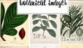 25 belles images botaniques pour vos murs