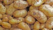 Germ guichet unique pour les pommes de terre - informations utiles