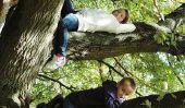 Équilibre biologique de la forêt - de sorte que vous expliquez les enfants
