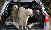 Alternative aux caisses de chien - Avis