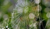 combat de Spider - aider les remèdes efficaces à domicile