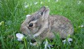 Le lapin est mort - donc vous pouvez l'enterrer