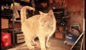 Le garage Chronicles: Bâtiment Château Avec Stevie Nicks et souris morte!  (Partie 2 de 4)
