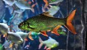 Qu'est-ce que manger du poisson?  - Maintenir les poissons d'aquarium correctement