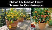 Comment faire pousser les arbres fruitiers dans des conteneurs