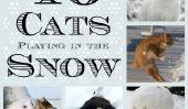16 Chats jouant dans la neige (Photos)