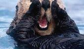 Adorbz est le nouveau vert: Otters pour sauver monde avec leur gentillesse Bare