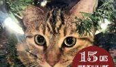 15 chats qui ont vraiment de l'Amour Arbres de Noël