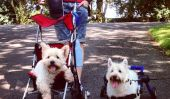 A Celebration Of Bipedal chiens, qui sont acing Life With Wheels
