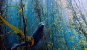 Les gagnants du concours de photographie amateur sous-marine