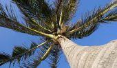 Palm Islande Dubaï - des informations intéressantes sur l'île