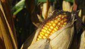 Acheter farine de maïs - il vous faut payer