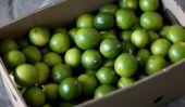 Pénurie de Limes aggravée par le Mexique cartel de la drogue: les prix de Cher fruits Soar, Restaurants Passez à préemballés jus de lime