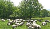 Construire griffe se présenter aux moutons lui-même - il en va