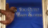 Bébé Sloths prendre un bain et je meurs de gentillesse!