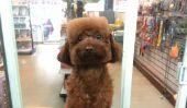 Ceci est le plus chaud nouvelle tendance de coupe de cheveux.  .  .pour chiens