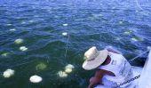 Des millions de méduses Cause réacteurs nucléaires arrêt Around The World