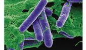 Top 10 des bactéries les plus dangereuses sur terre