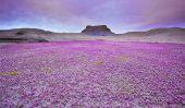 Desert Wildflowers dans le Plateau du Colorado