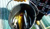 Hitra en Norvège - un tel succès la fête de la pêche
