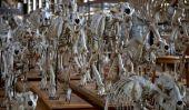 Parade des squelettes à la Galerie de Paléontologie et d'Anatomie comparée