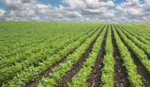Les aliments biologiques - quels sont les aliments biologiques?