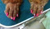 Nail Art polonais pour les chiens?  Apparemment, ceci est une «chose» (Photos)