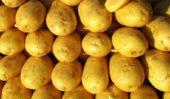 Construire la batterie de pommes de terre - donc réussit de