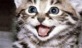 Happy Day World Cat: Voici, les 14 chats les plus photogéniques sur Internet