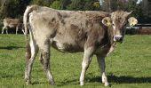 Le lait écrémé - En savoir plus sur les avantages et les inconvénients