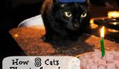 8 chats partagent leurs plans pour le réveillon du Nouvel An