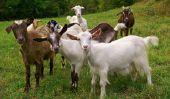 Les Chèvres du Pentagone - Soundtrack