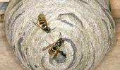 Retirer nid de guêpes: Qui paie?  - Pour clarifier la question du coût