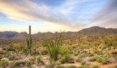 Desert écosystème