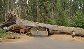 Tunnel Grâce à un séquoia géant déchu dans le parc national de Sequoia