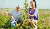 Plantez un arbre pour nouveau-né - comment cela fonctionne: