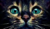 10 raisons pour lesquelles vous ne devriez jamais confiance à un chat
